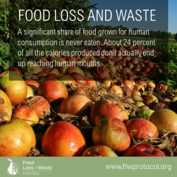 Food Loss + Waste